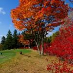 読書の秋♪ 食欲の秋♪ ゴルフの秋♪【UGMゴルフスクール亀戸店】