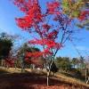 紅葉の季節どの様にゴルフコースを楽しみますか?【UGMゴルフスクール セントラルフィットネス岡崎店】