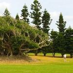 岡崎店より「南の島ゴルフツアー」のご報告♪【UGMゴルフスクール岡崎店】