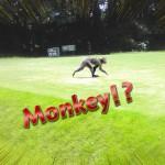 サルに会いました🐒【UGMゴルフスクール/ゆうぽうと世田谷レクセンター店】