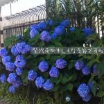アトレ亀戸そらいど広場【UGMゴルフスクール/ジェクサー亀戸店】