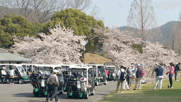 春のゴルフコンペ桜咲く 華麗なゴルフ?3