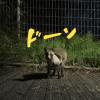 かわいい動物【UGMゴルフスクール/ゆうぽうと世田谷レクセンター店】